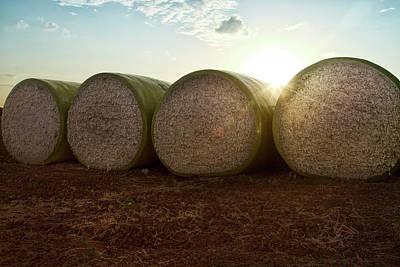 Round Bales Of Picked Cotton Art Print