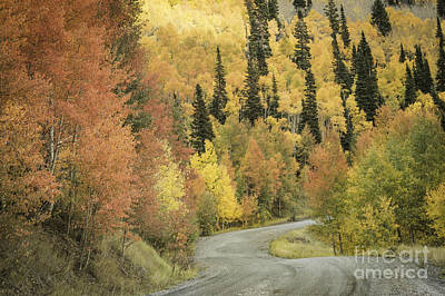 Photograph - Routt National Forest by David Waldrop