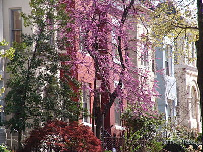 Photograph - Row Houses In Spring 1 by Rod Ismay