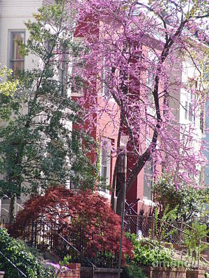 Photograph - Row Houses In Spring 2 by Rod Ismay