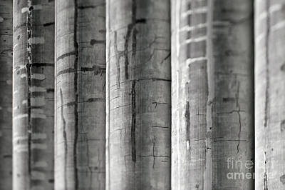 Dogpatch Photograph - Row Of Gray Silos by Eddy Joaquim
