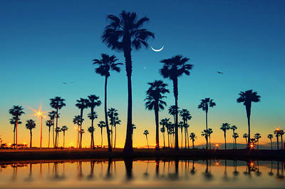 Row Of Palm Trees Art Print by Lee Sie Photography