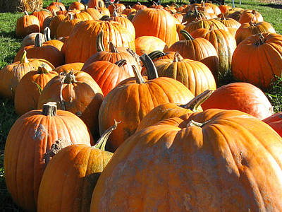 Photograph - Row Of Pumpkins by Leontine Vandermeer