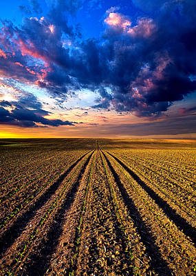 Rows And Rows Print by Phil Koch