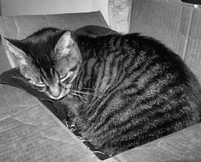 Photograph - Rox In A Box by Juliana  Blessington