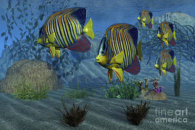 Iridescent Digital Art - Royal Angelfish Shimmer by Corey Ford