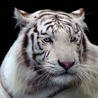 Tigris Digital Art - Royal Bengal White Tiger by Julie L Hoddinott