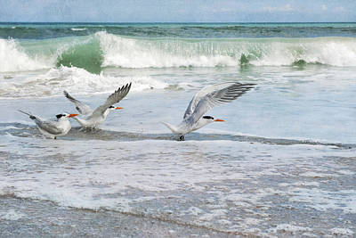 Photograph - Royal Terns by Cheryl Davis