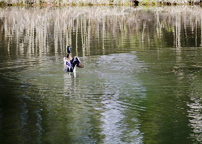Duck Photograph - Rubber Ducky Ripples In The Pond by LeeAnn McLaneGoetz McLaneGoetzStudioLLCcom