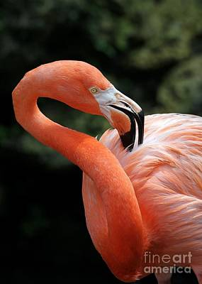 Photograph - Rubber Neck Flamingo by Sabrina L Ryan