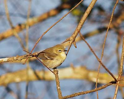 Ruby-crowned Kinglet Birds Photograph - Ruby Crowned Kinglet by Billy  Griffis Jr
