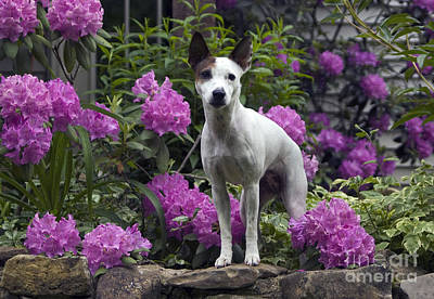 Ruby In The Garden Art Print by Denise Dempster
