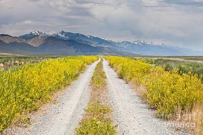 Ruby Mountains Wildflower Road Print by Sheri Van Wert