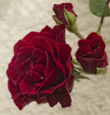 Photograph - Ruby Red Rose by Barbara Middleton