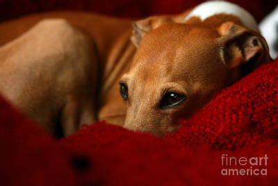 Photograph - Ruby Rest by Angela Rath