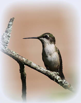 Basketball Patents - Ruby-throated Hummingbird - Totally Innocent by Travis Truelove