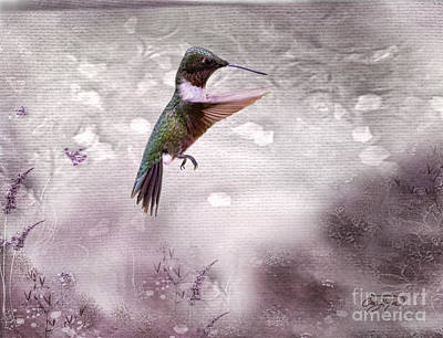 Decor Photograph - Ruby's Flight by Cris Hayes