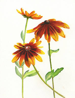 Black Eyed Susan Painting - Rudbeckia Hirta by Sharon Freeman