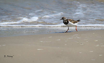 Photograph - Ruddy Turnstone In Texas by Roena King