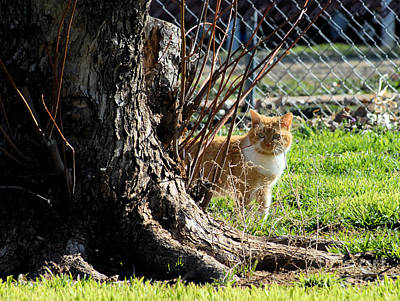 Photograph - Rudy Behind The Tree by Cheryl Poland