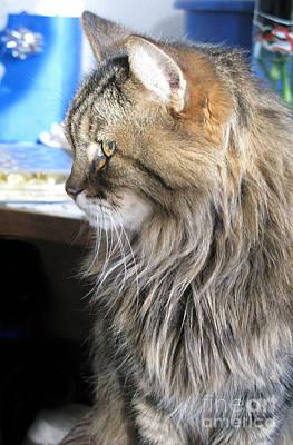 Photograph - Runcius- My King Kitty 01 by Ausra Huntington nee Paulauskaite