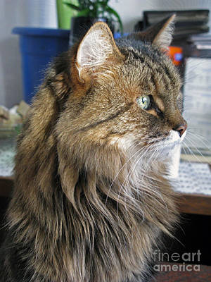 Photograph - Runcius- My King Kitty 02 by Ausra Huntington nee Paulauskaite