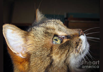 Photograph - Runcius- The King Kitty by Ausra Huntington nee Paulauskaite