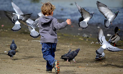 Photograph - Running With Birds by Fraida Gutovich