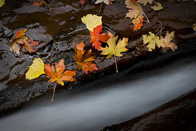 Zion National Park Photograph - Rushing Autumn by Jim Speth
