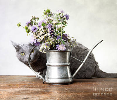 Elegant Cat Photograph - Russian Blue 03 by Nailia Schwarz