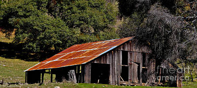 Amador County Photograph - Rusted Roof by Mitch Shindelbower