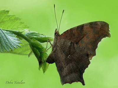 Photograph - Rustic Butterfly by Debra     Vatalaro