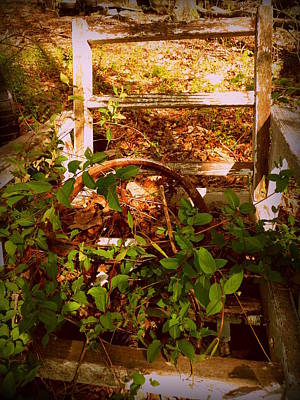 Photograph - Rustic Chair by Cindy Wright