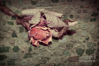 Photograph - Rustic Rose by Aimelle