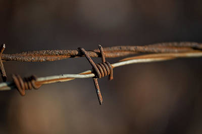 Photograph - Rusty Electric Fence Wire by Wilma  Birdwell