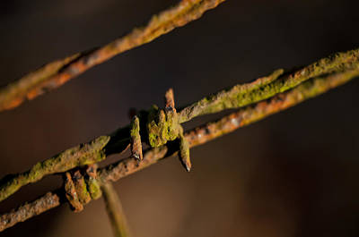 Photograph - Rusty Old Barbed Wire by Wilma  Birdwell
