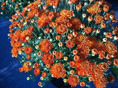 Photograph - Rusty Orange Mums With Blue by Sherry Oliver
