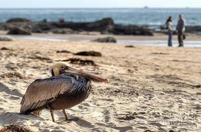 Photograph - Rusty Pelican by Eddie Yerkish