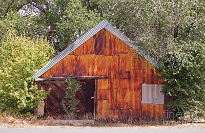 Photograph - Rusty Tin Shed by Donna Greene
