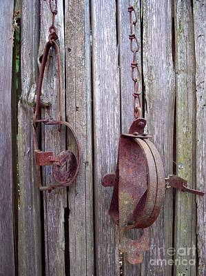 Photograph - Rusty Traps by Helen  Campbell
