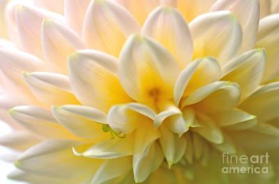 Of Dahlia Photograph - Rythmic Petals - Dahlia by Kaye Menner