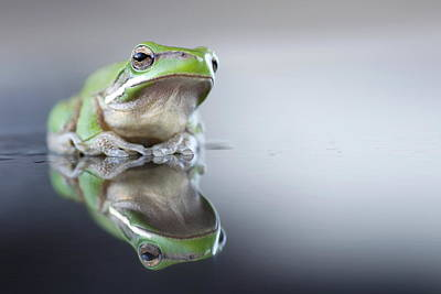 Sad Green Frog Art Print by Darren Iz Photography