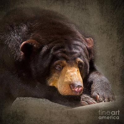 Adorable Digital Art - Sad Sun Bear by Louise Heusinkveld