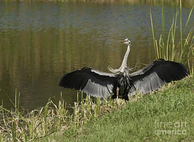 Photograph - Safe Landing by David Waldrop