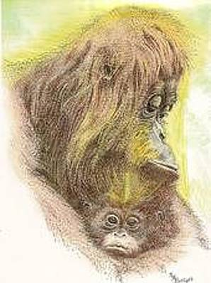 Baby Orangutan Drawing - Safe With Mom by M Marie Bettger