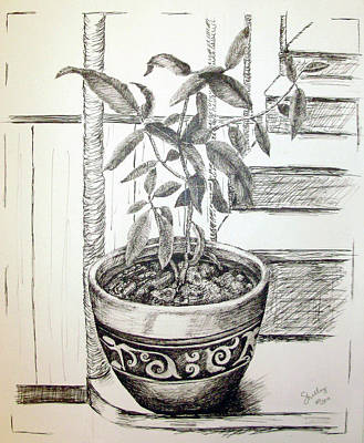 Drawing - Sage by Shelley Bain