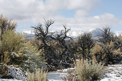Photograph - Sagebrush And Snow by Wes and Dotty Weber