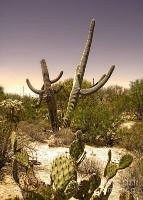Saguaro Cactus Dance Art Print by Gregory Dyer