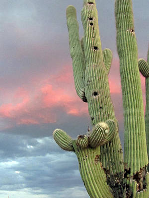 Saguaro In The Sky Art Print by Wendi Matson