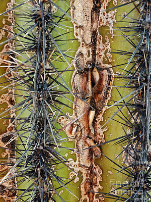 Photograph - Saguaro  by Methune Hively